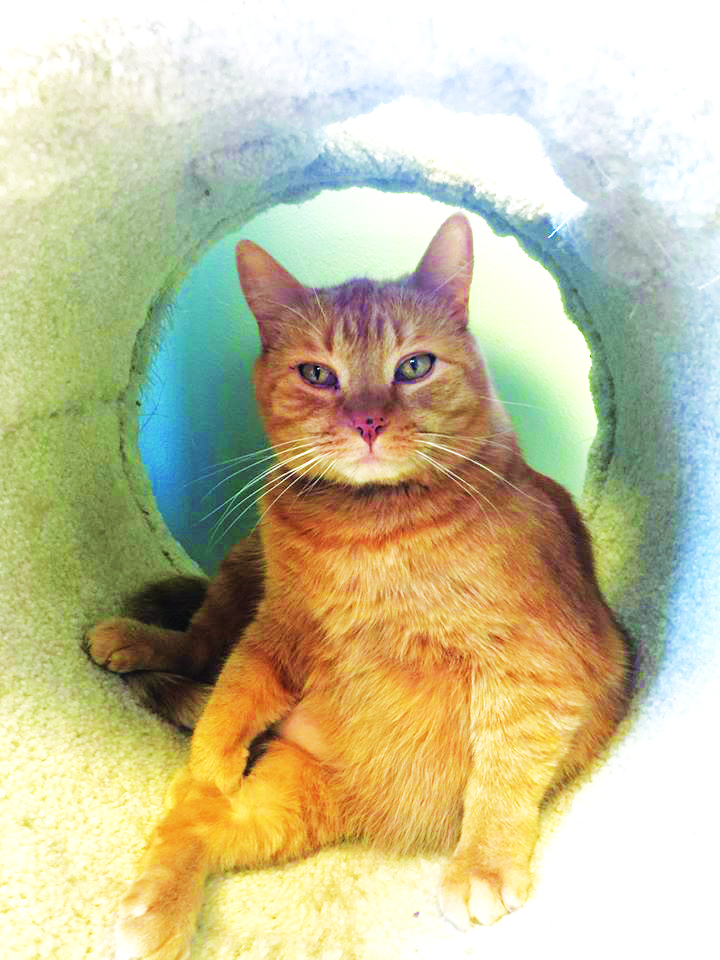 MEET SID! Mr. Sid is his name and chillin is his game! Sid is 5-years-old and grew up with dogs. He has almost been here a year and was surrendered to us. He is a very sweet and mellow gentleman who loves to give kisses Adoption Fee: $75