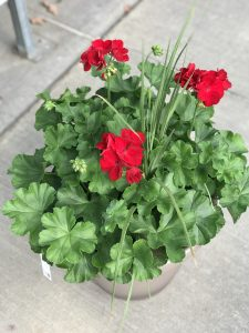 Geranium and Spike planter (3)