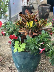 planter for sun